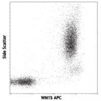 APC anti-human CD13